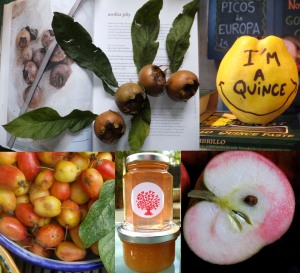 unusial fruit exp